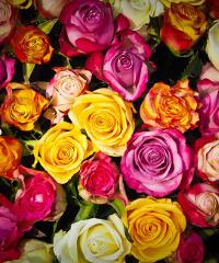 Erba Persa, mostra mercato di florivivaismo, prodotti naturali e artigianato