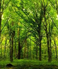 Percorsi botanici: visite guidate nei parchi milanesi