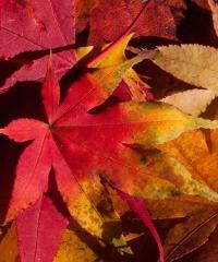 Fiera d'autunno