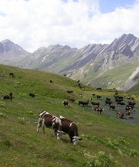Alpages Ouverts, una giornata in alpeggio