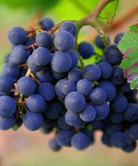 Festa dell'Uva di Impruneta