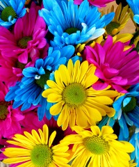 Adria in Fiore - aromi, profumi e colori di primavera