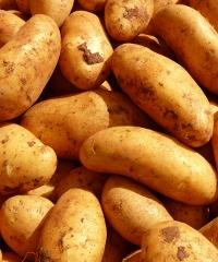 Feta di Trifolle, ricette di tutti i tipi a base di patate