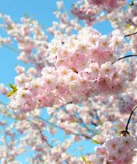 Fiera di primavera a Priocca