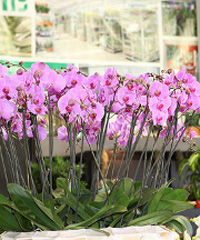 Flormart, il mondo del florovivaismo a Padova
