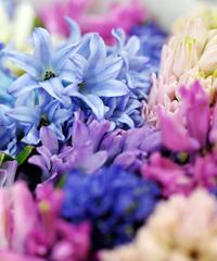 Festa di Primavera con Gorizia in Fiore