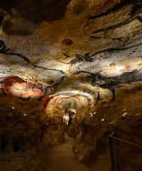 SOSPESO Al MANN una mostra sulle bellissime Grotte di Lascaux