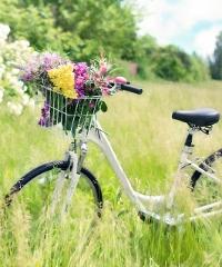 Vento Bici Tour 2019, da Torino a Venezia lungo il Po