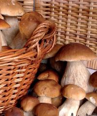 Funghi Fest a Castelbuono
