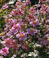 Todifiorita, mostra mercato di florovivaismo specializzato