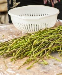 Festa degli Asparagi Selvatici a Postiglione