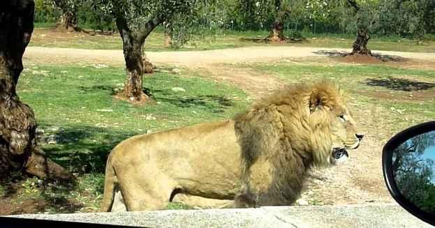 zoo safari in italia