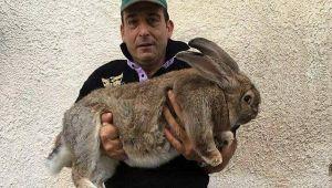 Giosuè il coniglio gigante