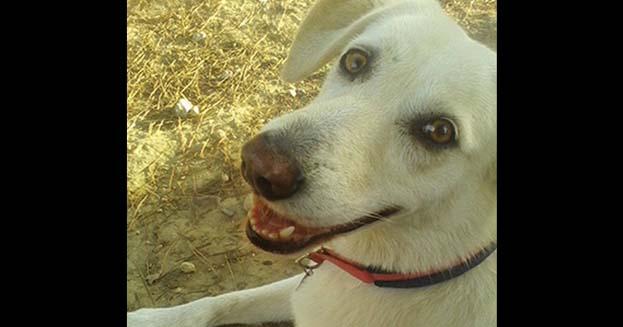 Il cane con il sorriso più bello è in Sardegna