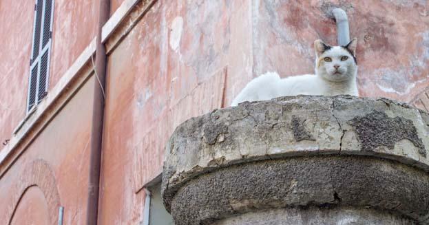 Festa del Gatto: ecco le città più gattare d'Italia