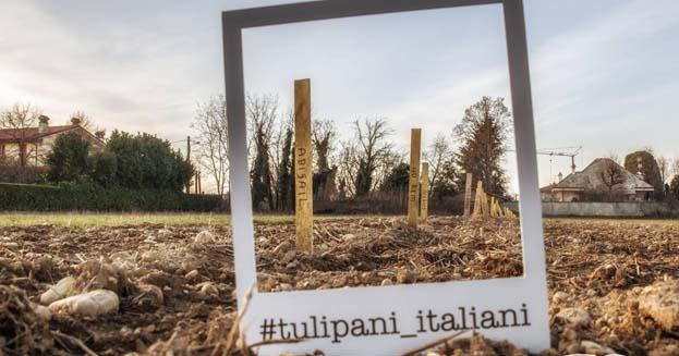 """La primavera """"olandese"""" di Milano: nasce il primo campo di tulipani d'Italia"""