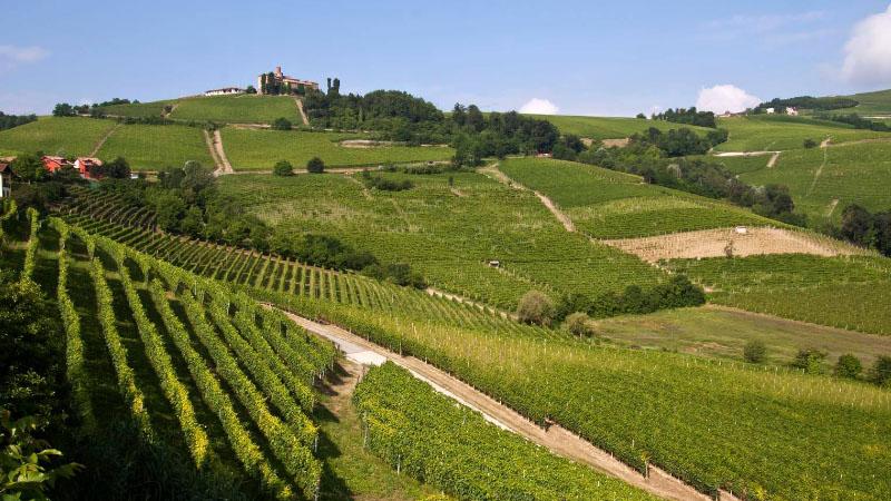 Dalla Marche alla Campania: ecco i vincitori delle spighe verdi, le bandiere blu dell'agricoltura