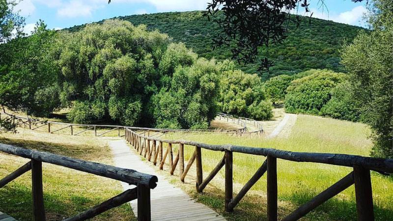 In Sardegna c'è l'albero più antico d'Italia: ha 4.000 anni ed è in gran forma