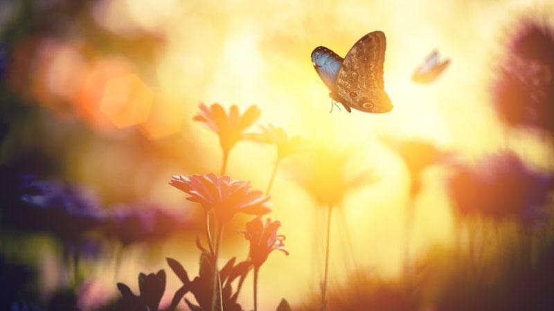 Farfalia, Il paradiso delle farfalle è in Puglia