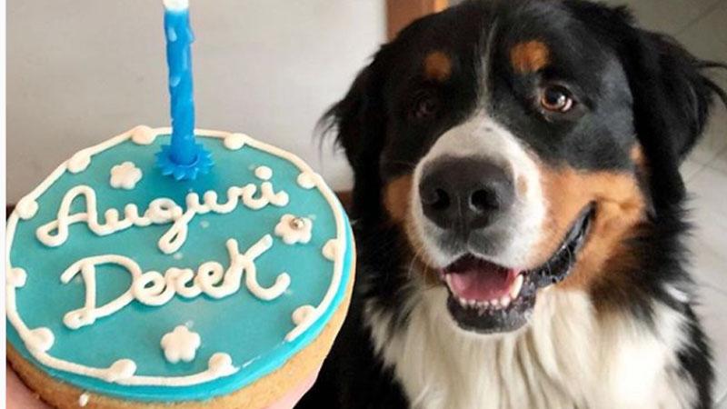 A Brescia la prima pasticceria artigianale per cani