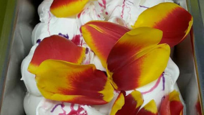 Ecco il gelato al gusto tulipano, un omaggio al campo di Cornaredo 1