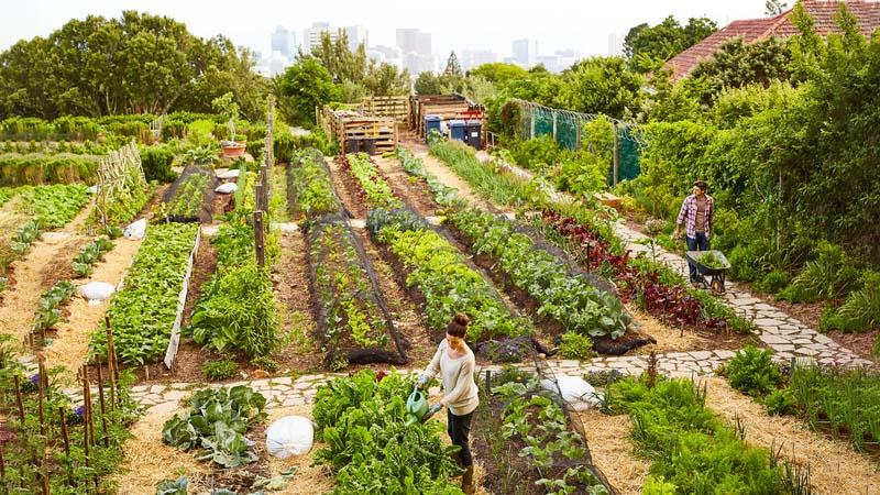 Amore per la terra, in Italia crescono gli orti in affitto
