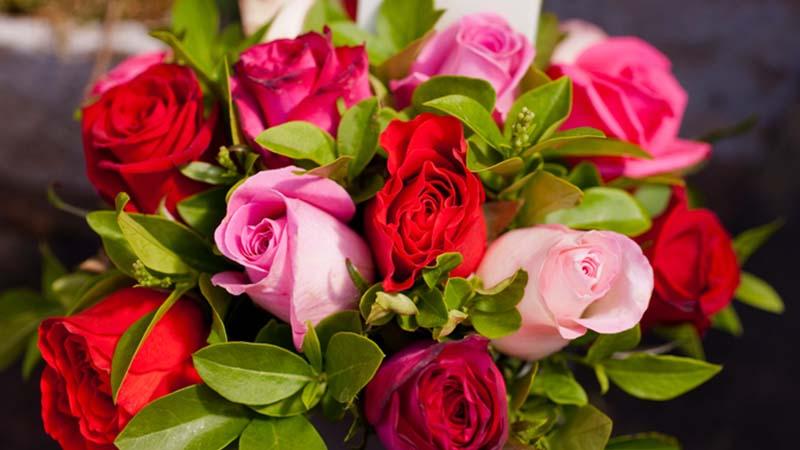 """L'omaggio di Coniolo agli innamorati: distributori di rose per le """"emergenze d'amore"""""""