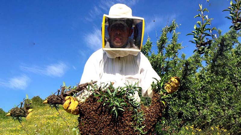 Agli Oscar del miele vince l'antica apicolutra gallurese