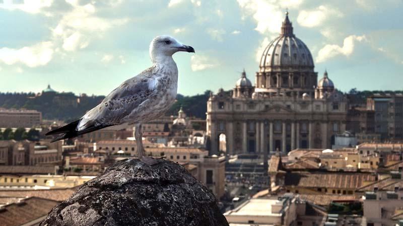 Il New York Times accusa, Roma sporca e invasa da gabbiani aggressivi