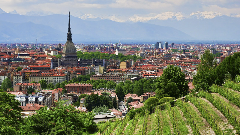 torino-grapes-in-town