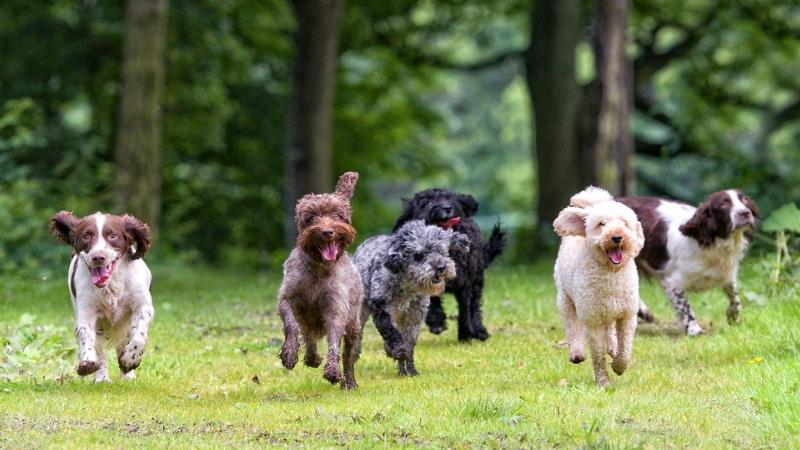 cani senza guinzaglio milano