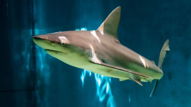 Le notti squali Acquario Genova