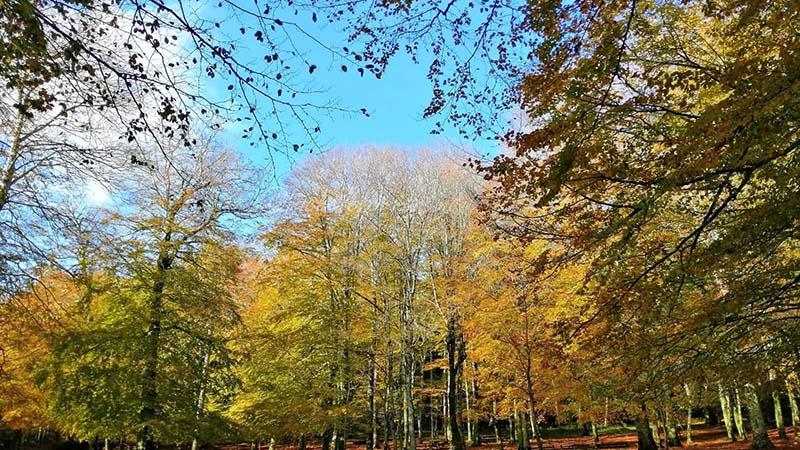 Un crowfunding per salvare la foresta umbra
