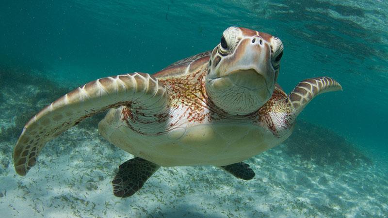 Portici, apre al pubblico il Centro Ricerche tartarughe marine