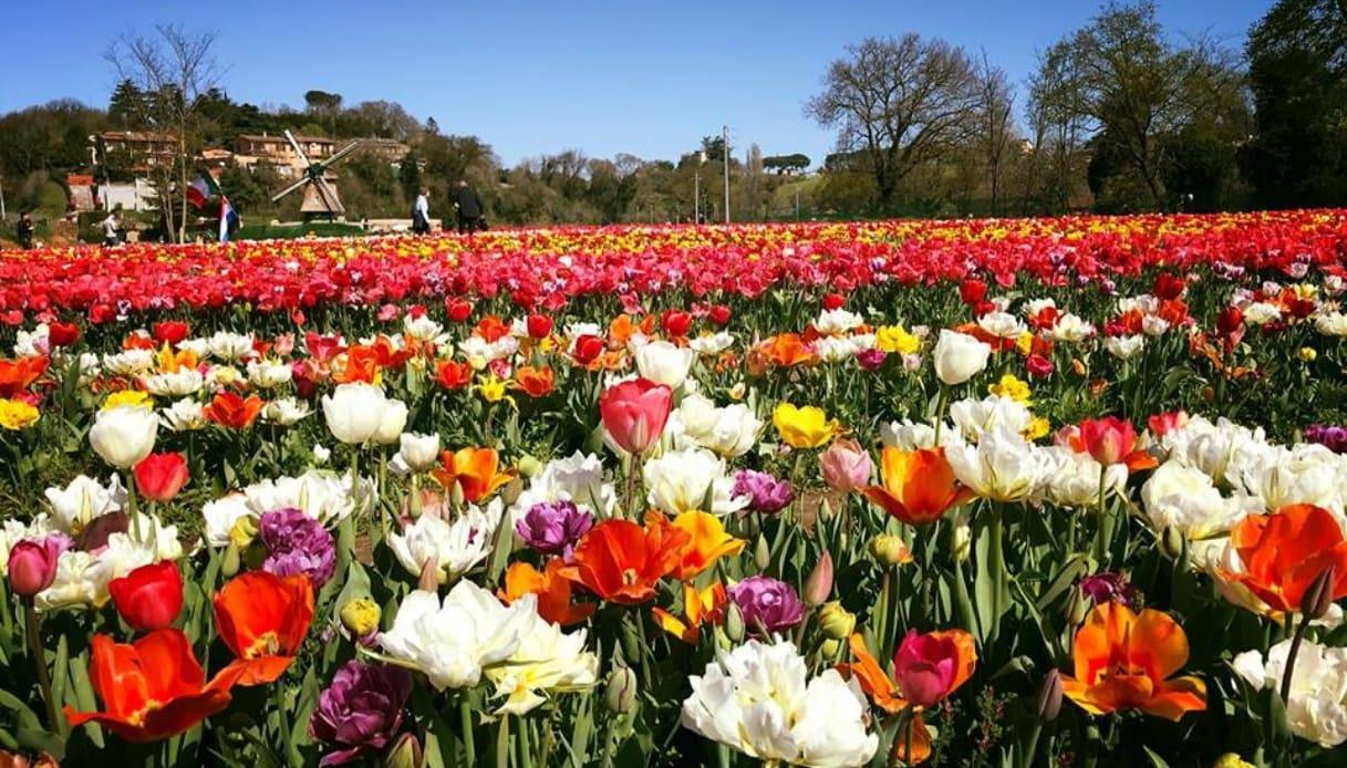 Anche Roma ha il suo giardino di tulipani: torna TuliPark