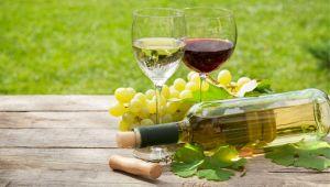 Guida Veronelli 2020: ecco i 5 migliori vini italiani
