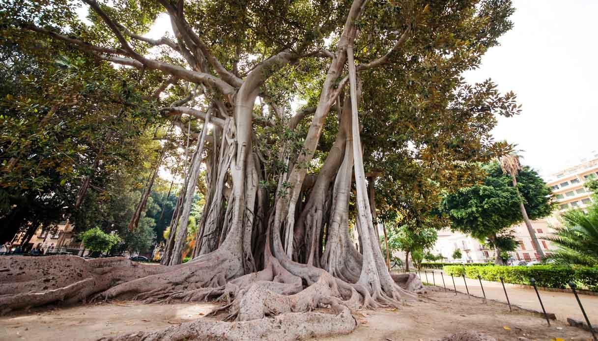 L'orto botanico di Palermo è il giardino più tropicale d'Europa
