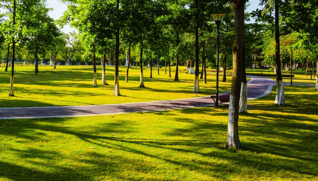 """Emilia Romagna """"corridoio verde"""" d'Italia: un albero per abitante"""