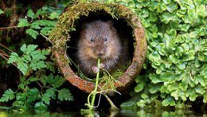 Sorpresa sul fiume Sarno: spunta un nuovo mammifero