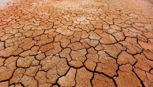 Allarme desertificazione in Italia: le aree più colpite