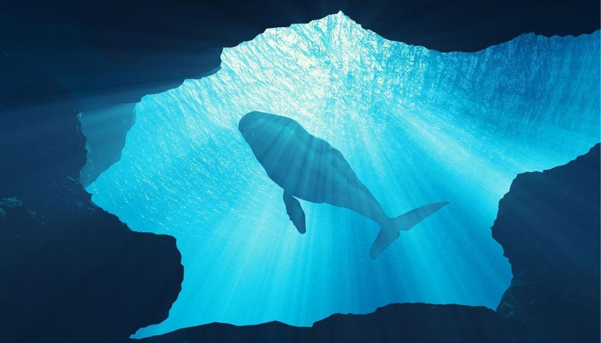 Come incontrare una balena a Milano: ecco Digital Wheels