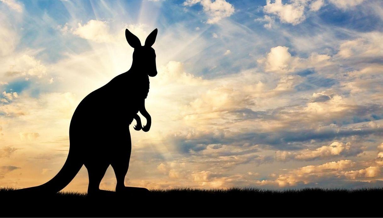Il mistero del canguro avvistato in Italia