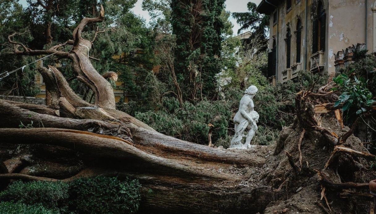 Maltempo Verona, danni Giardino Giusti: crolla Cipresso di Goethe