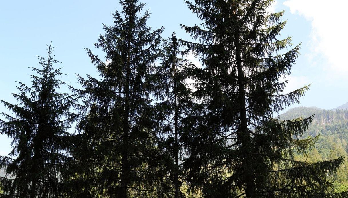 Tree Talker, in Trentino gli alberi sono