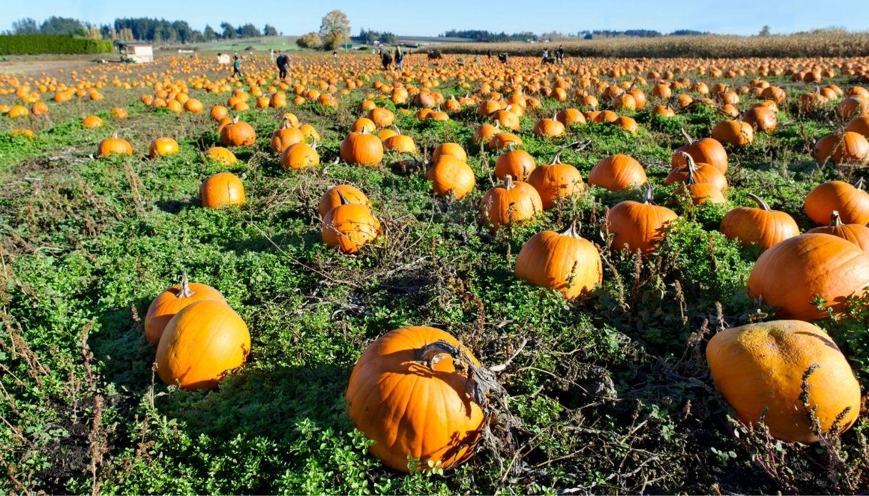 Villaggio delle Zucche, il Pumpkin Patch a San Martino Siccomario