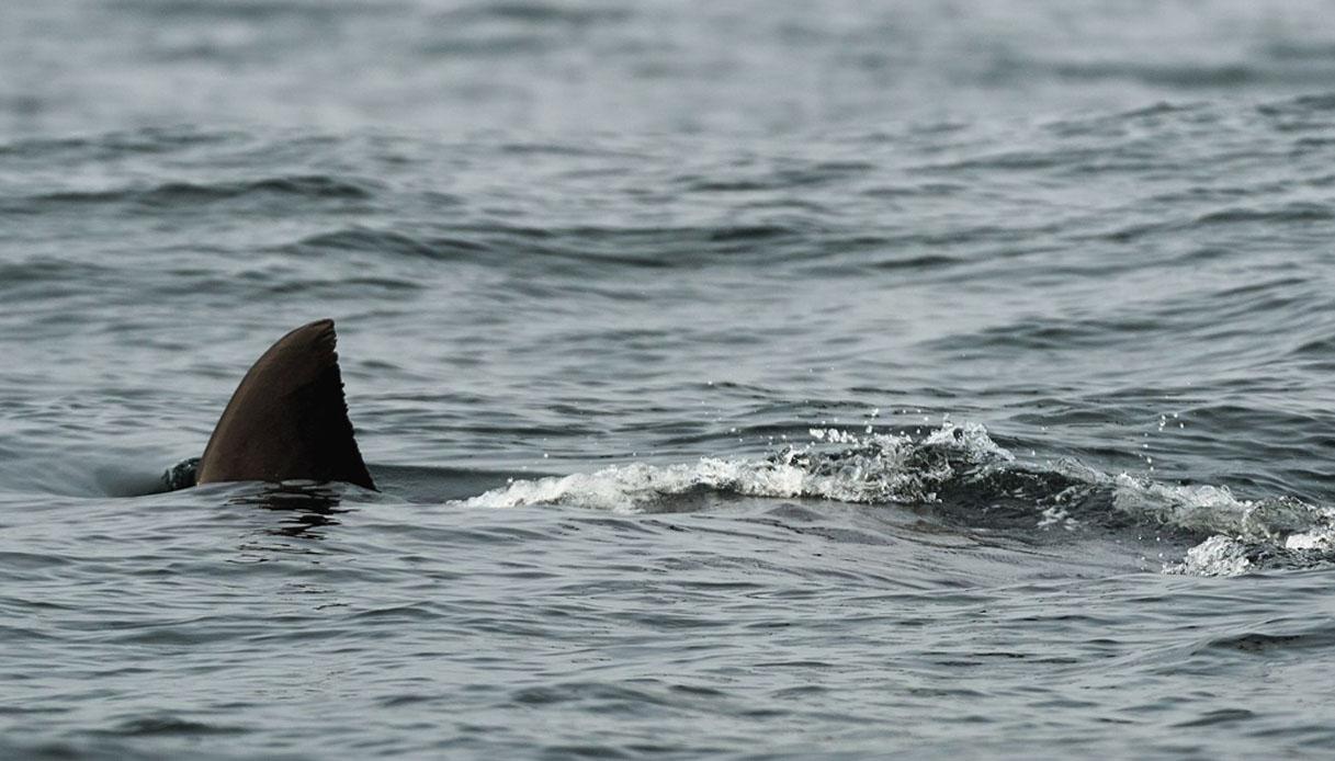 Venezia, donna attaccata da uno squalo al Lido: il suo racconto