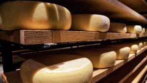 Presidi Aperti: le aziende Slow Food aprono le porte