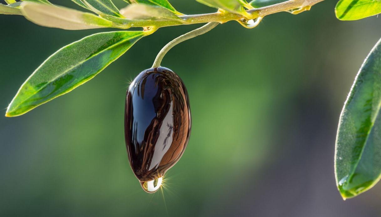 Puglia, un super olio italiano ha messo ko la Xylella