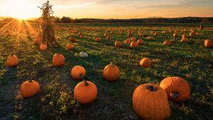 Pumpkin Patch, i campi di zucche di Halloween in Italia