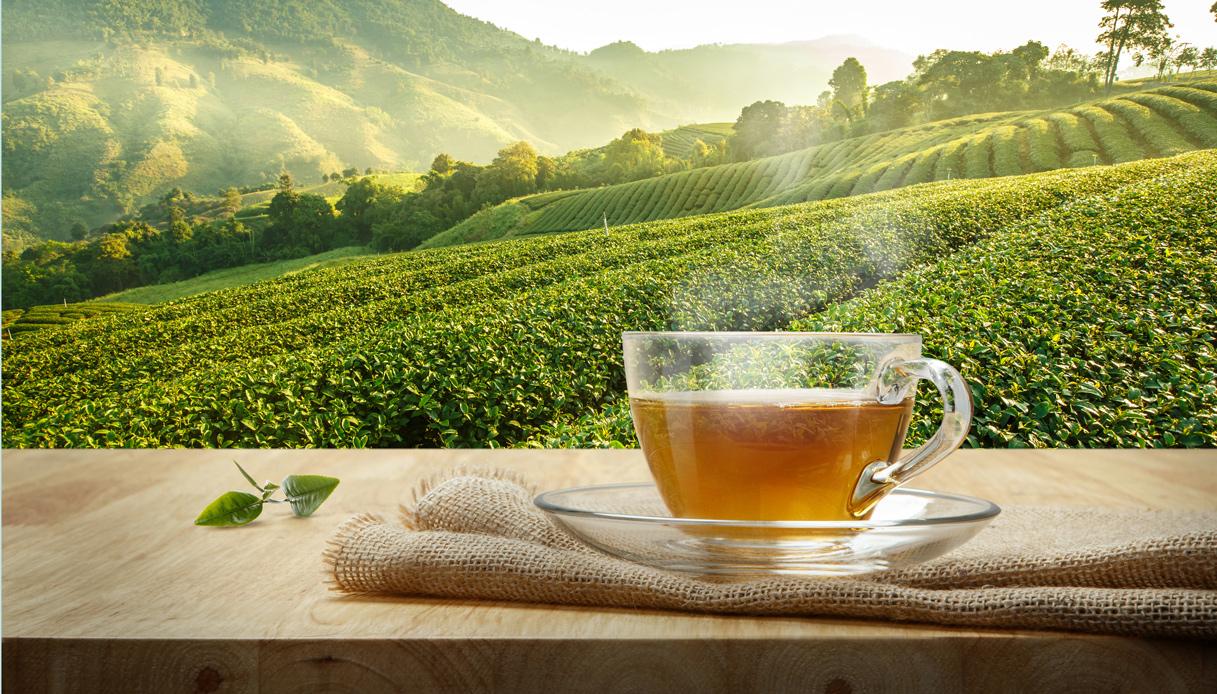 Il Tè Bianco del Verbano è il migliore del mondo